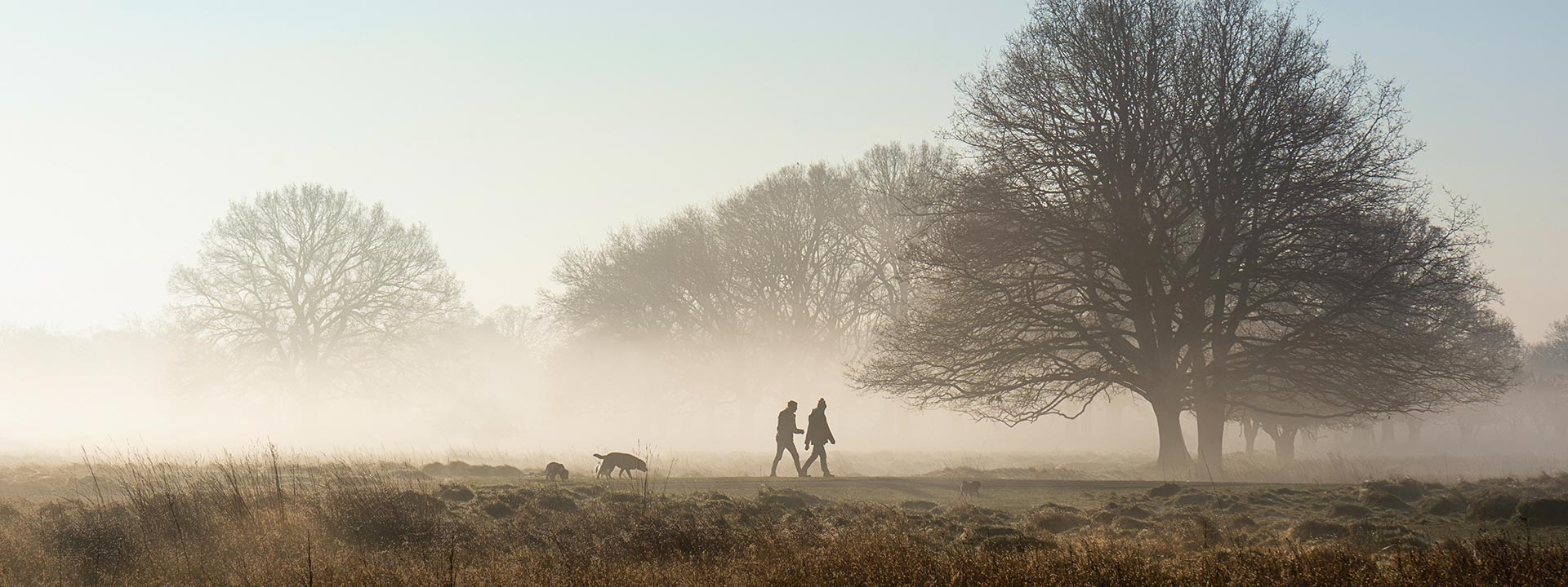 Two people and a dog walking in a foggy field